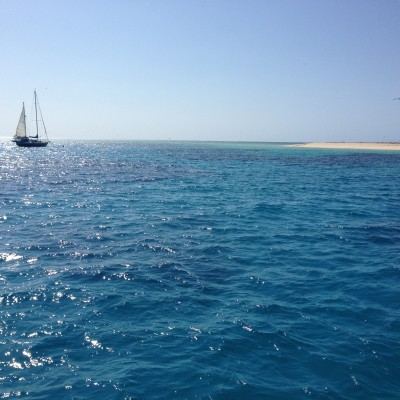At our first dive spot, Michaelmas Cay. It is right in the middle of the reef and is a shallow reef.  Here is a picture from the sky:  http://www.seastarcruises.com.au/files/photos/0/41-photo-2e4575d2eb2c37298fd98a8a4fa0c539.jpg