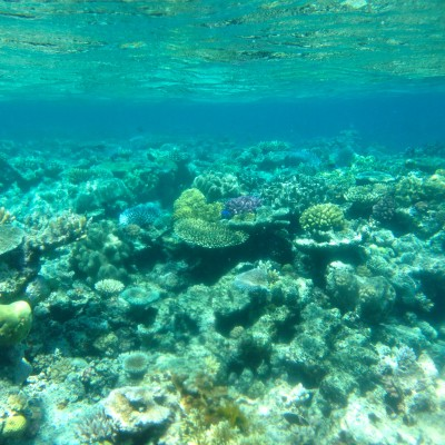 Here is a picture of all the coral.  In the water it literally seems to go on FOREVER.