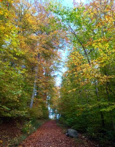 The amazing forest that surround the city of Zurich.  This was taken just a 20 minute walk from old town and the city center.